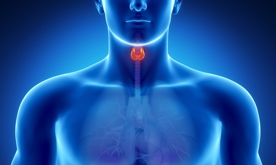 Glande Parathyroide Pdf